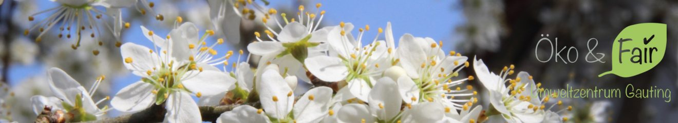 Kirschblüten-header1920x350-logo