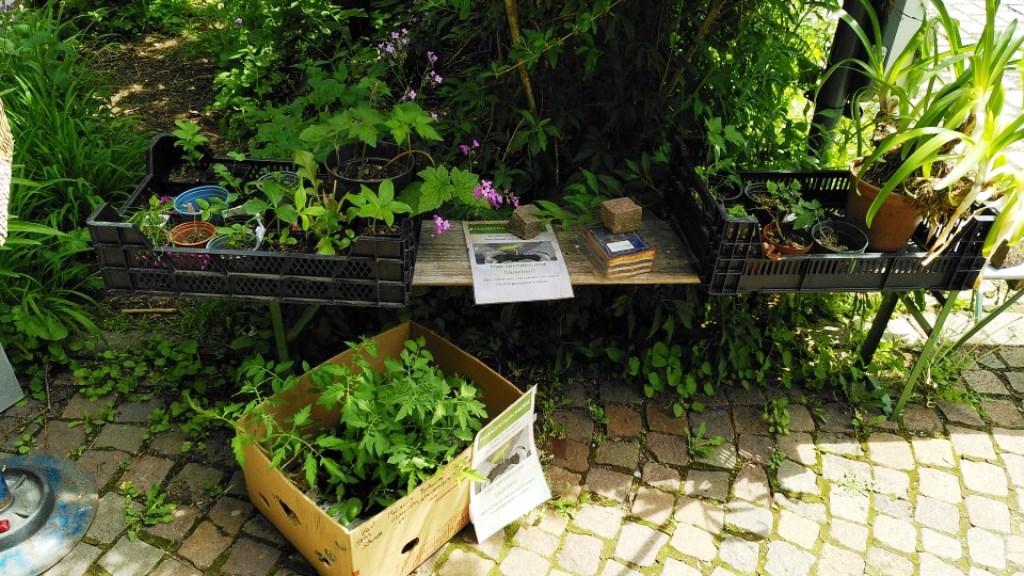 Tomaten und Salat in der Pflanzenbörse